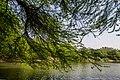 Sanjay Lake - panoramio.jpg