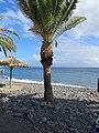 Santa Cruz - Madeira, 2012-10-24 (01).jpg