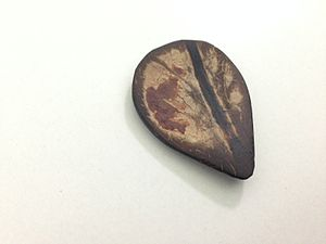 Sarod - A traditional hand crafted coconut shell sarod plectrum, also known as a Javva