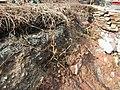 Screw Pickets, Mudstone Sands.jpg