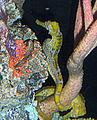 Seahorse closeup.jpg