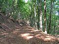 Sentiero 335 - panoramio (1).jpg