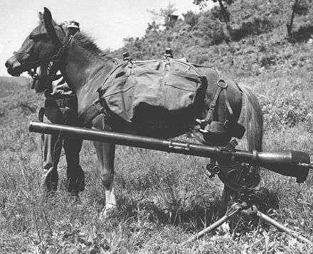 Sergeant Reckless, a highly decorated US Marine Corps artillery horse in the Korean War, pictured beside a 75 mm recoilless rifle in the 1950s. Sgt Reckless with recoilless-rifle.jpg