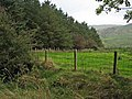 Shelter belt, near Straiton - geograph.org.uk - 264600.jpg