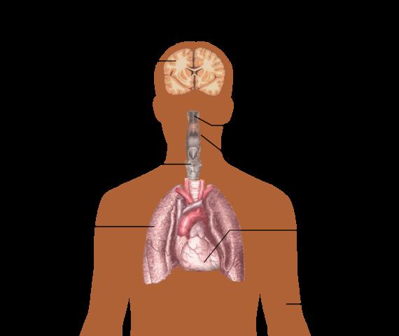 candidiasis darm symptome