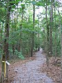 Simmons Arboretum trail 2007.jpg