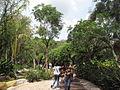 Singapore Zoo 28.JPG