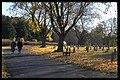 Skogskyrkogården - KMB - 16000300018389.jpg