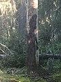 Skogsväsen.jpg