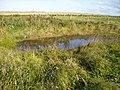 Small pond near North Cliff Country Park - geograph.org.uk - 559222.jpg