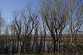 Smith & Bybee Lakes (13764802904).jpg