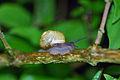 Snail 2 (2530341681).jpg