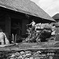 Snople podaja s podajačem za mlatev, Vrbje pri Šepcu 1956.jpg