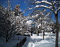 Snowy sidewalk - Blizzard of 2010.JPG