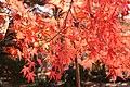 Sogi Park Autumn Leaves.jpg