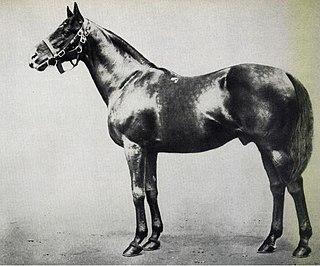 St. Frusquin British-bred Thoroughbred racehorse