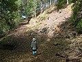 Starr-091115-1292-Fraxinus uhdei-habitat with Forest and rock wall-Olinda-Maui (24622550709).jpg
