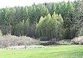 Stedtlinger Moor 2.jpg