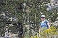 Steelhead Falls (15460871052).jpg