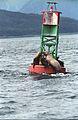 Steller Sea Lion09(js).jpg