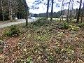 Stensättning vid Torten (RAÄ-nr Sörby 178) 6946.jpg