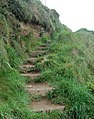 Steps on the coastpath north of Pentireglaze Haven - geograph.org.uk - 1468388.jpg