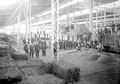 Strohlager Maschinenhalle Landesausstellung - CH-BAR - 3237976.tif