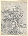 Study for Tree Trunks and Lane MET DP822052.jpg
