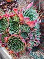 Succulents - Photo by Giovanni Ussi 3.jpg