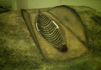 Ship burial - Model of the Sutton Hoo ship's structure as it might have appeared, with chamber area outlined