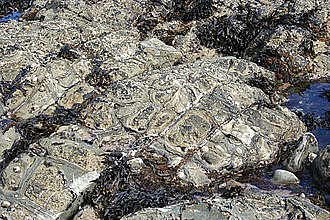 Waterloo Bay - Image: Synaeresis Cracks geograph.org.uk 474655