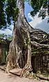 Ta Phrom, Angkor, Camboya, 2013-08-16, DD 37.JPG