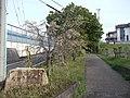 Taikogane Ryokuchi 20150418.jpg