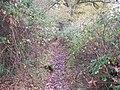 Tangled web - geograph.org.uk - 1579472.jpg