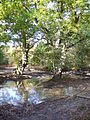 Tankards Pond - geograph.org.uk - 575490.jpg