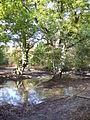 Tankards Pond - geograph.org.uk - 575490.jpg