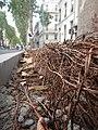 Tapis de racines de platane sous trottoir Platanus root mat under sidewalk Lille northern France 08.jpg