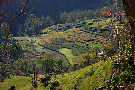 Terraced rice farming in Nepal Terraces, south of Ghara (4525876548).jpg