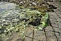 Tessellated Pavement 16.jpg