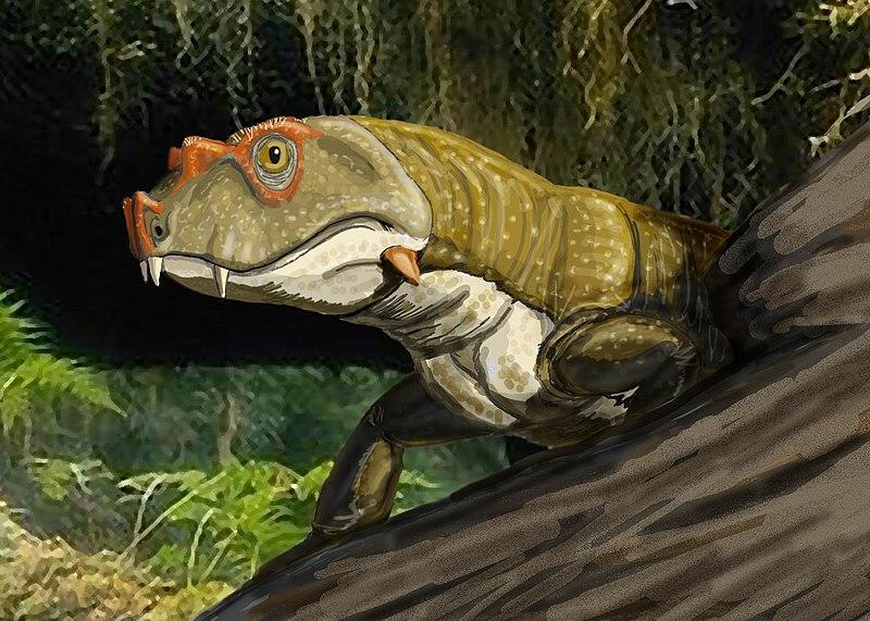 File:Tetraceratopsinsignis1DB.jpg