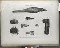 Thèbes. Hypogées. Momies et détails de crocodile, de serpent et de chien (NYPL b14212718-1267985).tiff