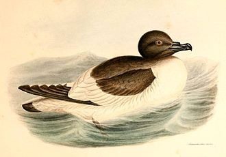 Svarthamaren Mountain - The mountain holds the largest known breeding colony of Antarctic petrels
