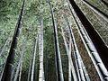 The Bamboo Garden (1) - panoramio.jpg