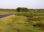 File:The Beaulieu Road crossing heathland above Stephill Bottom, New Forest - geograph.org.uk - 28337.jpg