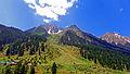 The Beauty of Naltar Valley, Naltar, Dist. Gigit, GB.jpg