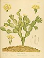The Cactaceae (Plate XIX) (6025951379).jpg