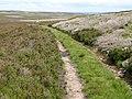 The Carriers' Way at Blackburn Head - geograph.org.uk - 511838.jpg