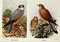 The birds of the British Isles and their eggs (8264894796).jpg