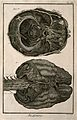 The brain, after Haller and Ridley. Engraving by Benard, lat Wellcome V0007844EL.jpg