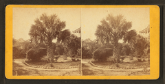 The palmetto tree, Charleston, S.C, by Quinby & Co..png